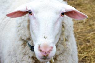 Bah Bah Blacktail Farm (13).jpg