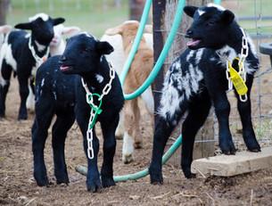 Bah Bah Blacktail Farm (17).jpg