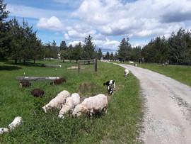 Bah Bah Blacktail Farm (41).jpg