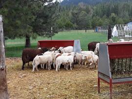 Bah Bah Blacktail Farm (45).jpg