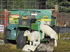 Bah Bah Blacktail Farm (39).jpg