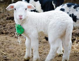 Bah Bah Blacktail Farm (22).jpg