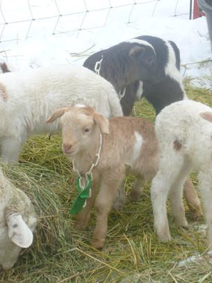 Bah Bah Blacktail Farm (7).jpg