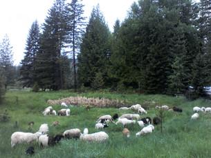 Bah Bah Blacktail Farm (59).jpg