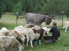 Bah Bah Blacktail Farm (2).jpg