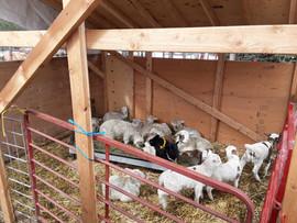 Bah Bah Blacktail Farm (46).jpg