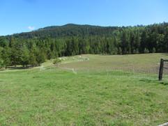 Bah Bah Blacktail Farm (29).jpg