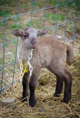 Bah Bah Blacktail Farm (23).jpg