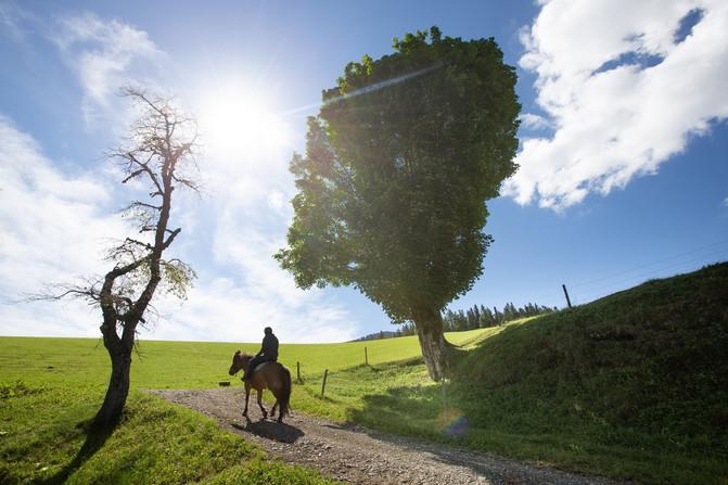 Kmetija Visočnik fotografiranje okolice