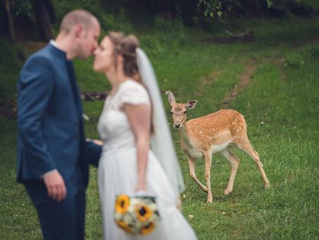 Poroka na Jelenovem Grebenu