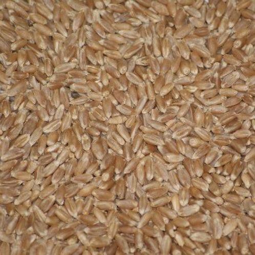 Wheat Grain for Sprouting Organic