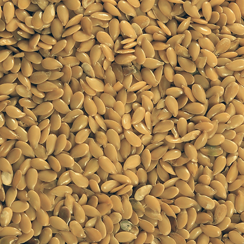 Linseed Organic
