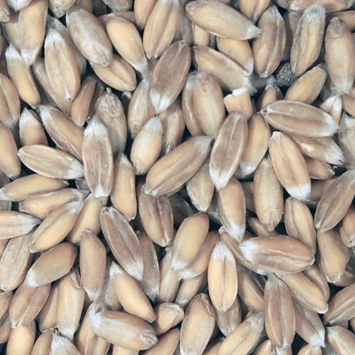 Spelt Grain (500g) Organic