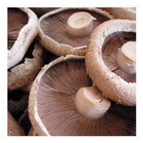 """Mushrooms """"Portobello"""" Large (250g) """"x3"""" Organic"""
