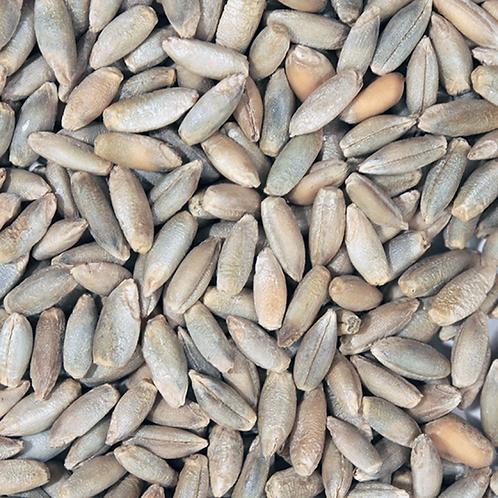 Rye Grain (500g) Organic