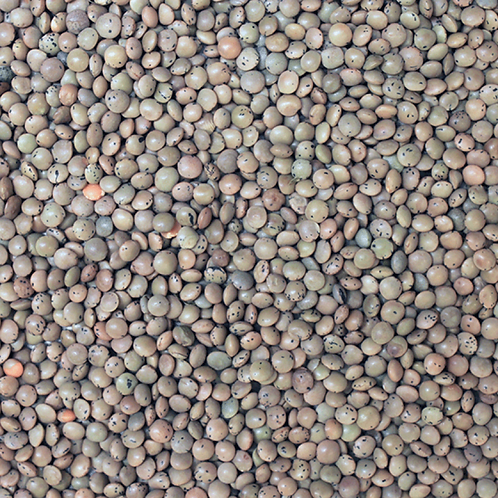 Brown Lentils (500g) Organic