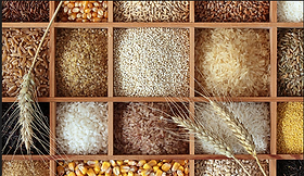 cereals-and-food-grains-500x500.png