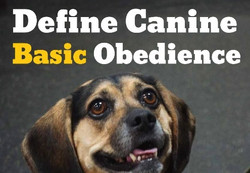 Define Canine Basic Obedienc