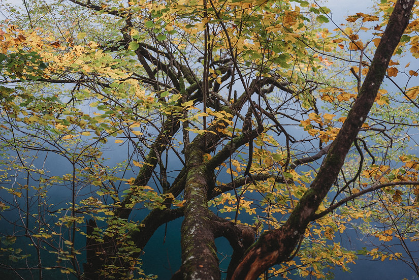 Yellow on Blue, 2020 Edition Archival Matte Fine-Art Print