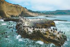 Cormorant Leap