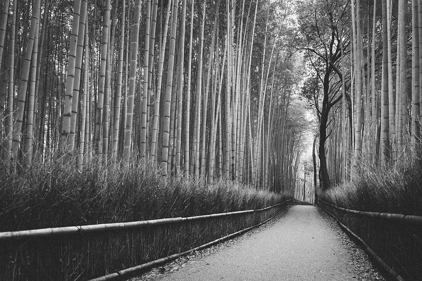 Bamboo Forest, 2020 Edition Archival Matte Fine-Art Print