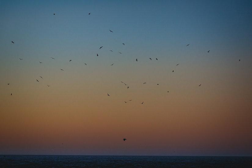 Birds at dusk, 2020 Edition Archival Matte Fine-Art Print