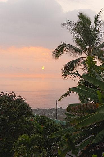 Mango Sunset, 2020 Edition Archival Matte Fine-Art Print