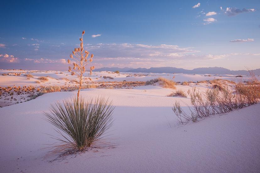 Desert Life, 2020 Edition Archival Matte Fine-Art Print