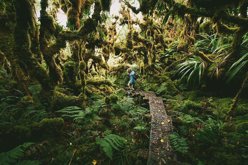 West Maui Rainforest, 2020 Edition Archival Matte Fine-Art Print
