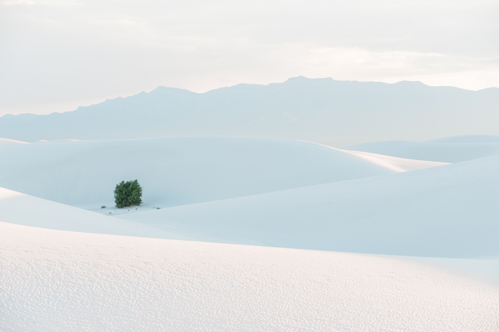 A tree at White Sands