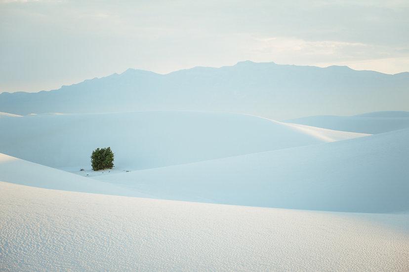 Solitude, 2020 Edition Archival Matte Fine-Art Print