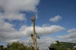 Removing branches