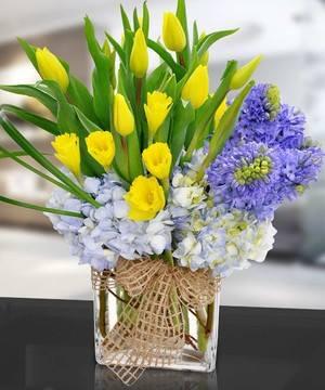 Hydrangia/Tulips/Daffodils/Stock