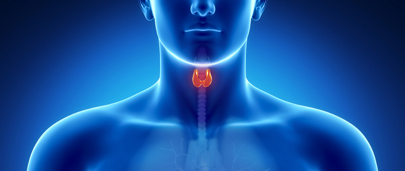 Thyroid Diseases -Bloods4you