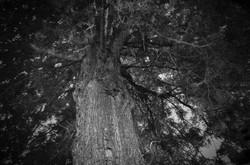S_なりまさ木