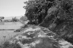 成政 山道