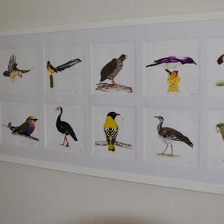 Wtarecolour birds