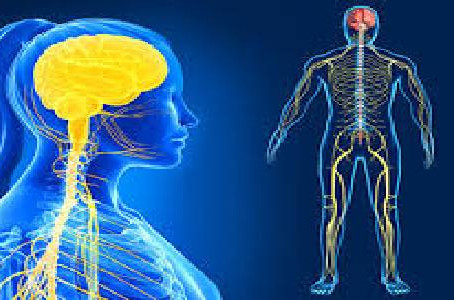 Problems Affecting The Human Nervous System