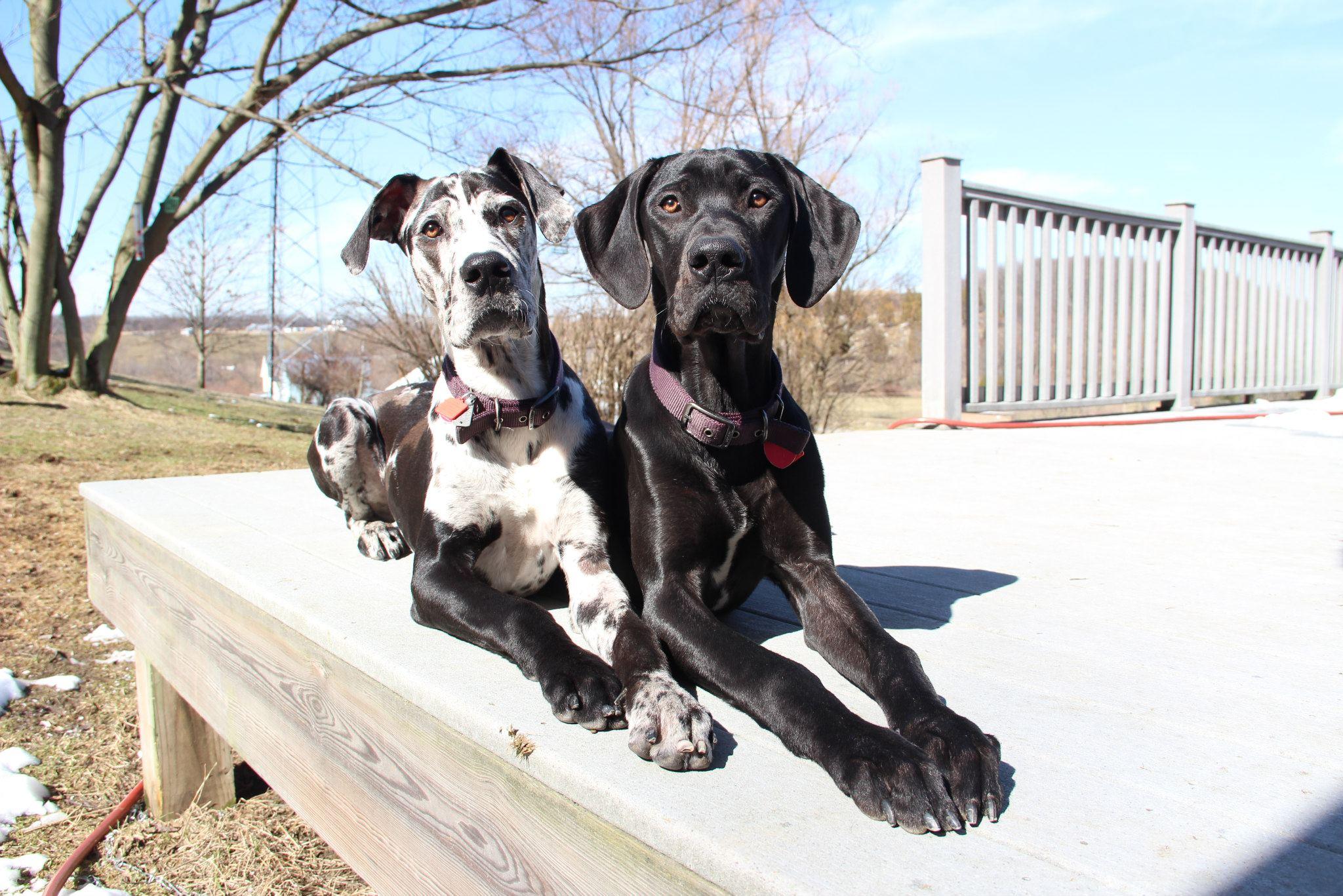 Mobile Vet Vought Veterinary Services - Derry, PA