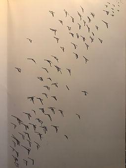 Response 4_Amy Zheng_Birds Sketch.jpeg
