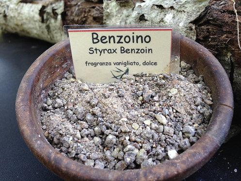 Benzoino grigio Sumatra (Styrax Benzoin) (Sumatra)15g