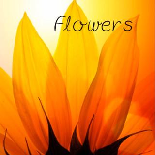 04 Flower-per-web.jpg