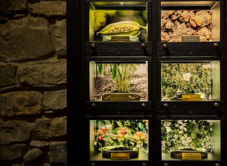 OSMORAMA…la Biblioteca degli Aromi