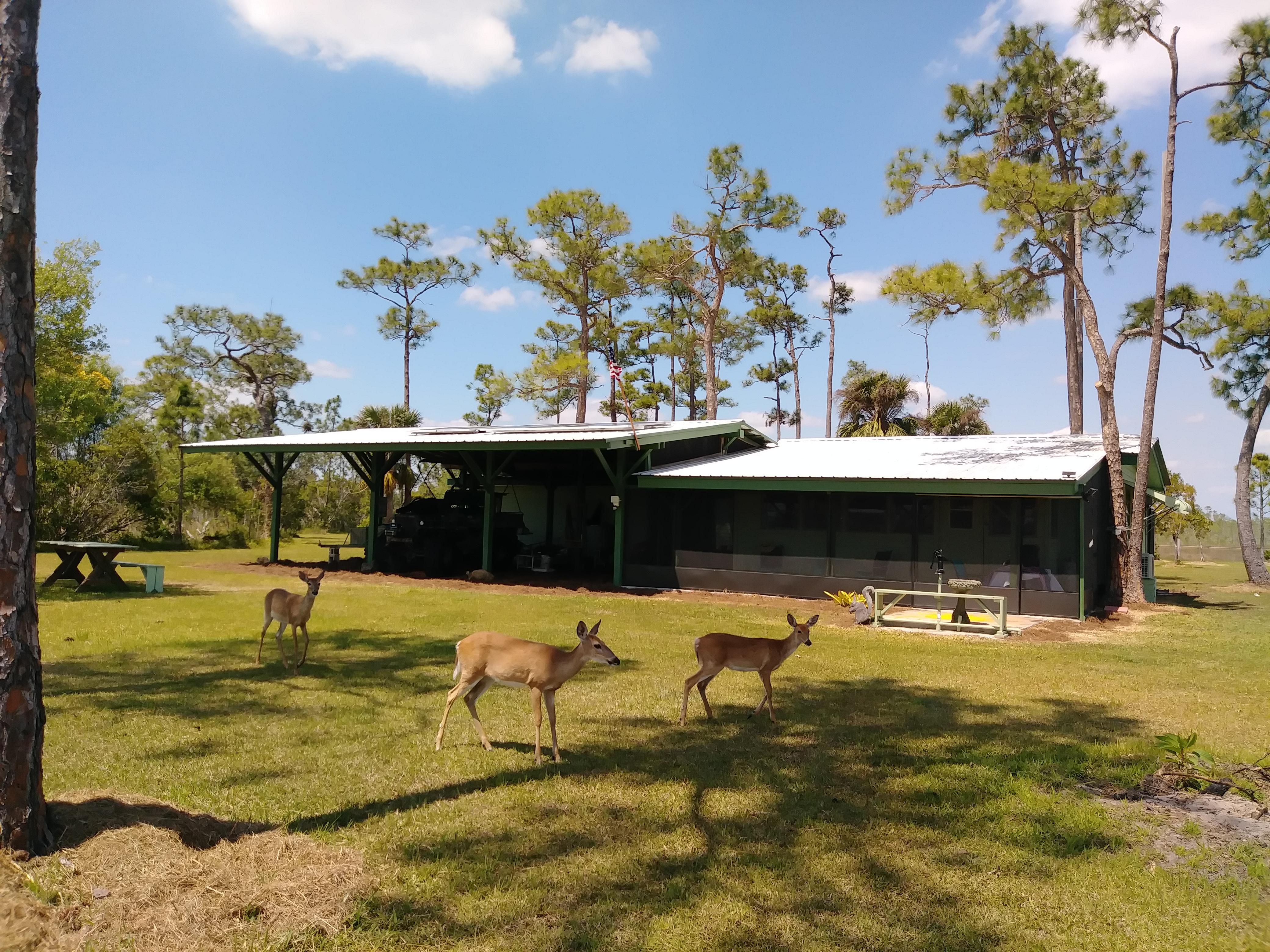 Deer in Front