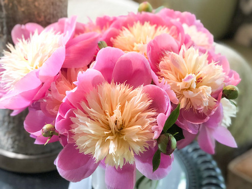 How to Stake Peonies in 3 Easy Steps