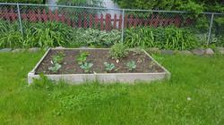Gregs garden