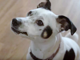 Lucy The Dog Debuts in Almost Amy Webseries Premiering January 2016