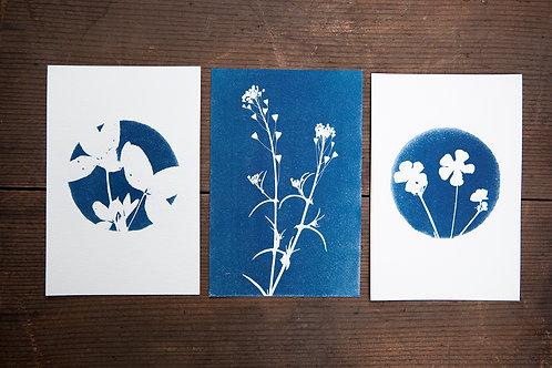 Wild Flower Postcard Set