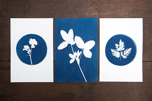 Amsterdam Botanical Postcard Set