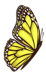 yellow butterfly 1.png